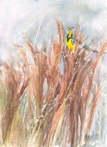 Rod Busch, Meadowlark in Rushes, watercolor on paper