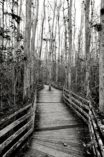 Colleen Provost Naples, Florida Cypress Sentinel, 2012 digital photograph 36 x 24 inches