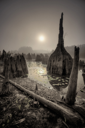 Gareth Rockliffe Naples, Florida Dead Lakes, 2011 digital photograph - archival print 40 x 30 inches